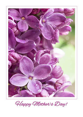 Happy Mother's Day Purple Lilac Poster by Mariola Szeliga
