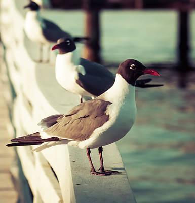Happy Seagull  Poster by Debra Forand