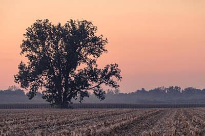 Harvest Tree Poster by Andrea Kappler