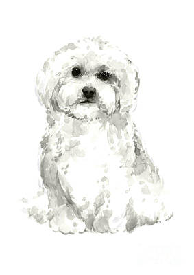 Maltese, Havanese Custom Dog Illustration, White Dog Art Print, Maltese Watercolor Painting Poster by Joanna Szmerdt