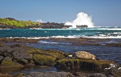 Hawaiian Green Sea Turtle  Poster by James Walsh