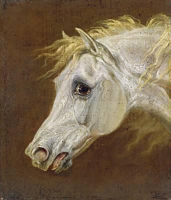 Head Of A Grey Arabian Horse  Poster by Martin Theodore Ward