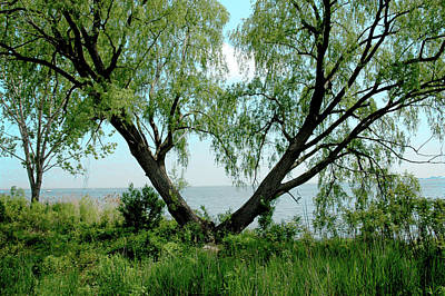 Heart Tree On Lake Saint Clair Poster by LeeAnn McLaneGoetz McLaneGoetzStudioLLCcom