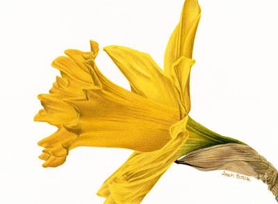 Herald Of Spring Poster by Sarah Batalka