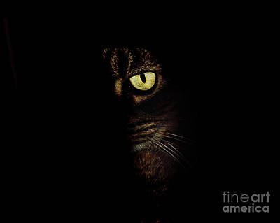Hidden Kitty Under The Cover Of Darkness Poster by Andee Design