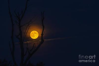 Highland Moon  Poster by Thomas R Fletcher
