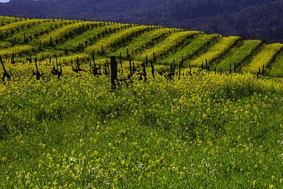 Hills Of Mustard Grass Poster by Garry Gay