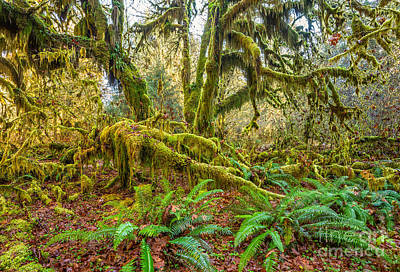 Hoh Rainforest Poster by Jamie Pham