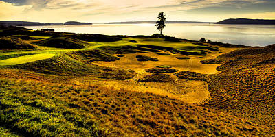 Hole #15 - The Lone Fir At Chambers Bay Poster by David Patterson