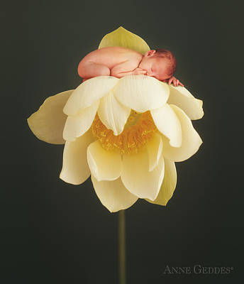 Hollie In Lotus Poster by Anne Geddes