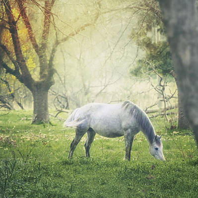 Horse Grazing In Meadow Poster by Wolf Shadow  Photography