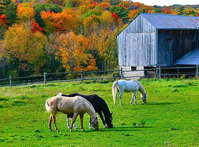 Horses In Fall Poster by David  Hubbs