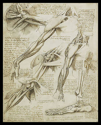 Human Arm Study Poster by James Christopher Hill