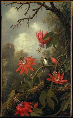 Hummingbird And Passionflowers Poster by Martin Johnson
