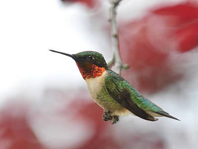 Hummingbird Watch Tower Poster by Lara Ellis