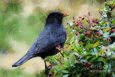 Hungry Blackbird Poster by Jutta Maria Pusl
