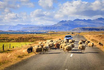 Icelandic Traffic Jam Poster by Alexey Stiop