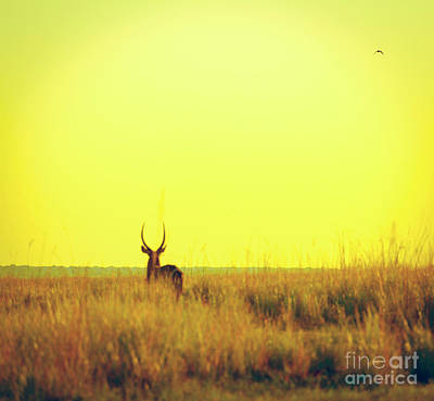 Impala Sunset Vintage Print Poster by Tim Hester