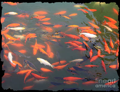 Imperial Koi Pond Poster by Carol Groenen