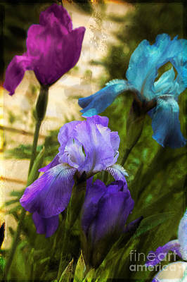 Impossible Irises Poster by Mindy Sommers