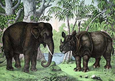 Indian Elephant And Rhinoceros Poster by Biodiversity Heritage Library