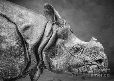 Indian Rhino Profile Poster by Jamie Pham