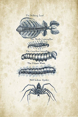 Insects - 1792 - 17 Poster by Aged Pixel