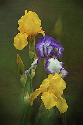 Irises Poster by Angie Vogel