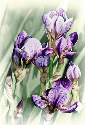 Irises Poster by Marcia Colelli
