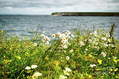 Irish Flower Impression Poster by Juergen Klust