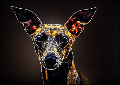 Italian Greyhound Poster by Alexey Bazhan