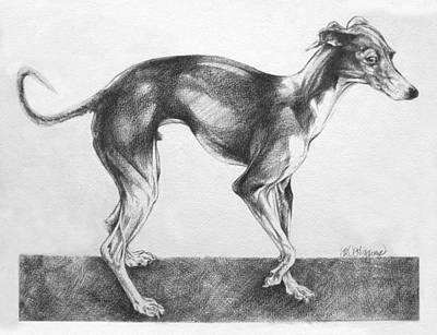 Italian Greyhound Poster by Derrick Higgins