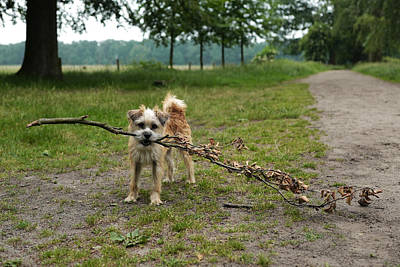 Dutch Dog With A Branch Poster by Rona Black