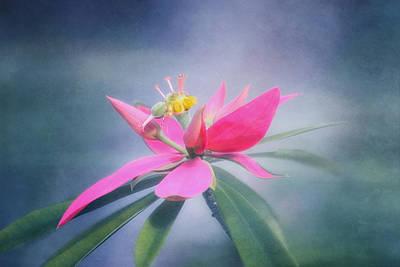 Jamacian Poinsettia Poster by Kim Hojnacki