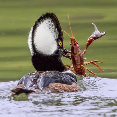 Jambalaya Crawfish Pie File Gumbo Poster by Leslie Reagan - Joy To The Wild Photos