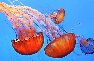 Jelly Fish Poster by Jill Buschlen
