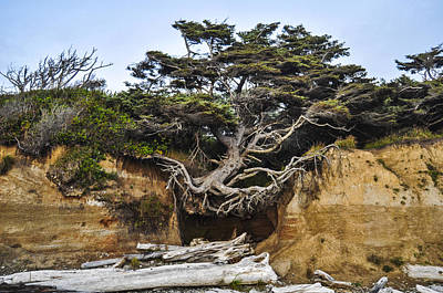 Kalaloch Hanging Tree Poster by Pelo Blanco Photo