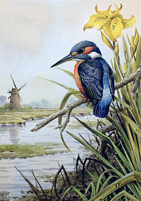 Kingfisher With Flag Iris And Windmill Poster by Carl Donner