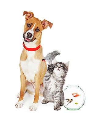 Kitten Dog Bird And Fish Together Poster by Susan Schmitz
