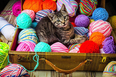 Kitten In Suitcase With Yarn Poster by Garry Gay