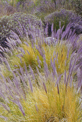 Landscape With Purple Grasses Poster by Ben and Raisa Gertsberg