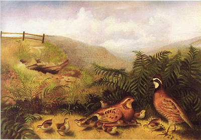 Landscape With Quail Cock Hen And Chickens Poster by MotionAge Designs