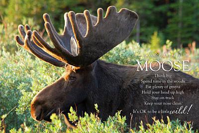 Large Bull Moose In Summer Velvet Poster by Teri Virbickis