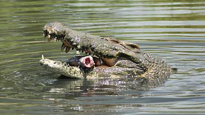 Large Saltwater Crocodile 1 Poster by Gary Crockett