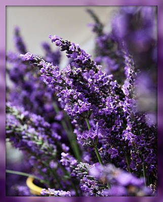 Lavender Poster by Cathie Tyler