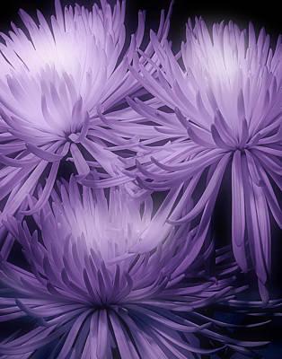 Lavender Mums Poster by Tom Mc Nemar