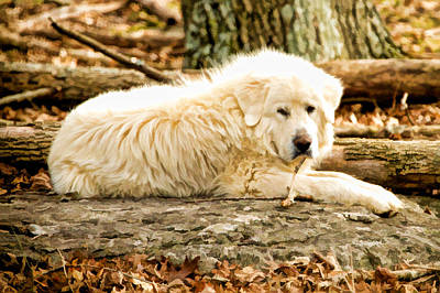 Lazy Dog Poster by Paul Bartoszek