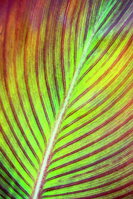 Leaf Abstract Poster by Christina Rollo