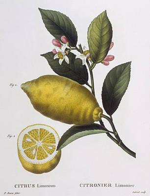 Lemon Poster by Pancrace Bessa