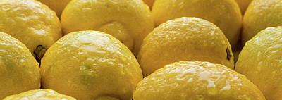 Lemons Lemons Lemons  Number 3 Poster by Steve Gadomski